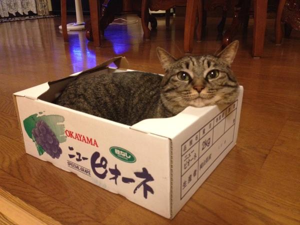 看板猫 ココアです。 エンビロン しみ/しわ/たるみ/ニキビ